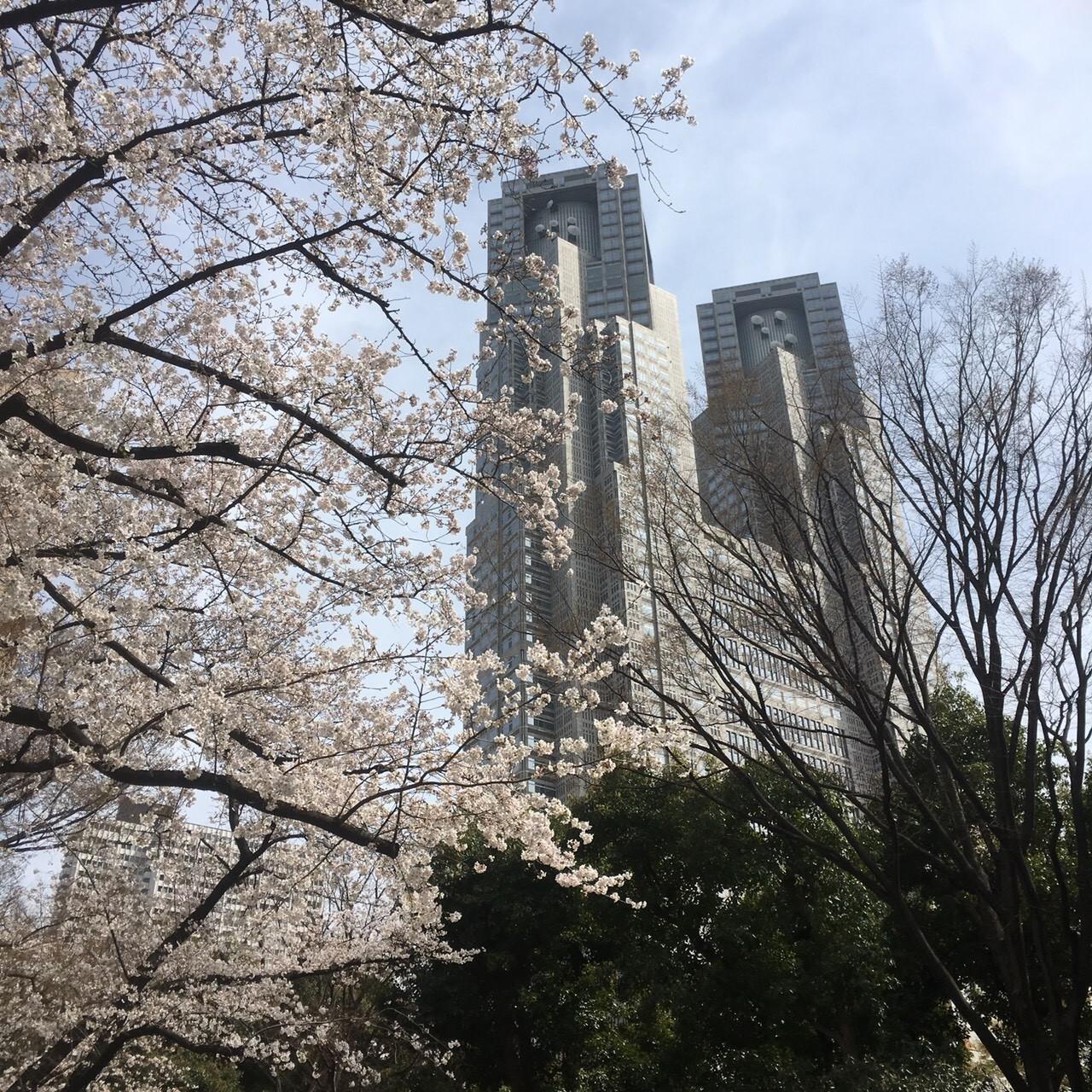 西新宿も桜満開